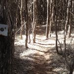 Track marker through the trees (102820)