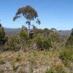 View from Bournda Trig (103462)