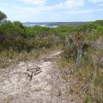 Arrow marker down bushtrack north of Leather Jacket Bay (103579)