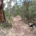 Service trail to Mowarry Point (104413)