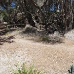 Track away from the dunes to Hobart Beach camping area (104953)