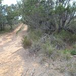 Service trail north of Pulpit Rock Rd (107047)