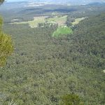 The Megalong (10778)