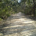 Six Foot Track south of Nellies Glen (11030)