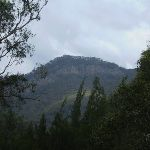 In the Megalong Valley (11621)