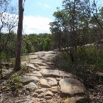 Rocky section of the Mt Kuring-gai Track (116551)