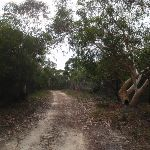 Gibbergong track east of lookout track (117022)