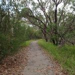 Enjoying the dry forest on the Gibbergong track (117082)