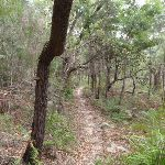 Gibbergong track South of Lovers Jump creek (117148)