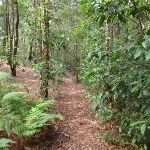 Shady forest on the Gibbergong track (117352)
