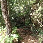 Old Picnic area at base of Cockle Creek lookout track (119881)