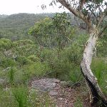 One of several view points on the Bungaroo track (122314)