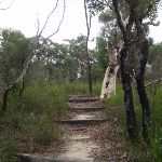 Most of the Bungaroo track is very clear (122368)