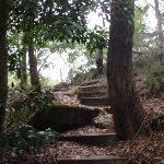 Steps at the bottom of the Bungaroo track (122500)