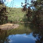 Staying close to Middle Harbour Creek (124606)