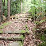 Historic steps on Two Creeks Track (125197)