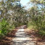 Currie Rd Service trail (127534)