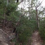 Lawsons Lookout track (146373)