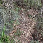 Track up to Lawsons Lookout (146379)