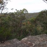 View into valley from Lawsons Lookout (146388)