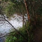 Track beside Nepean River (146730)