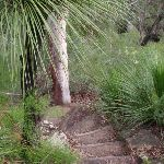 Bushland surrounds the steps to Blue Pool (148233)