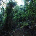 Canopy in the bush (148758)