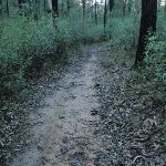 Track to the Causeway (152304)