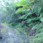 Ferns by the trail (153019)
