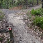 Junction of Stringybark ridge management trail and the GNW (153478)