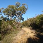 Along the Topham track (156571)