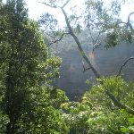 The Rainforest Lookout (16402)
