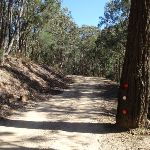 Dubbo Gully Rd management trail (166880)