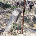 Old fence post (168557)