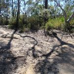 Int Wrights Creek trail and OGNR (169250)