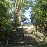 Steps near int of Prince Henry Cliff Walk and Reids Plateau loop (17224)