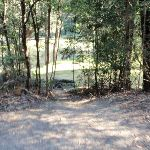 Short track leading to Willow Tree picnic area (172692)