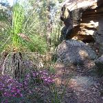 Walking past grass tree and rock formations (177918)