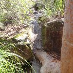 Track leading to Piles Creek cascades (179919)