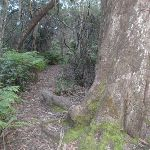 Track between Lyrebird Dell and Pool of Siloam (186633)