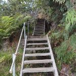 Stairs on Lyrebird Dell Track (186876)