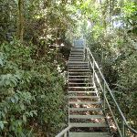 Metal stairs on the Rainforest walk (199552)