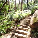 Steep section on the Rainforest walk (200821)