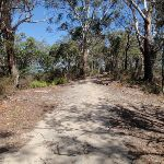 Drier forest on the ridgetop (201508)