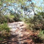 Track of the side of Pearl Beach / Patonga fire trail (218372)