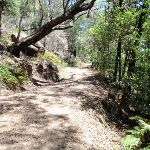 Trail above cave (219503)