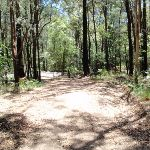 Crystal Ave from Pearl Beach / Patonga fire trail (219650)