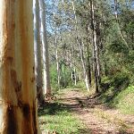 Tall gums on the Simpsons Track (221816)