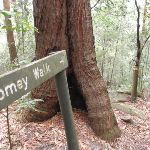 Following Tommey walk sign (225544)