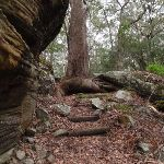 Track passing beside large rock (225793)